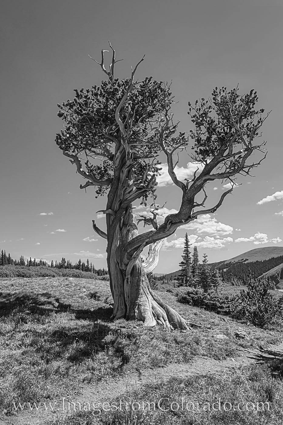bristlecone pine, hell's hole trail, idaho springs, hiking, trails, hiking colorado, colorado hikes, photo
