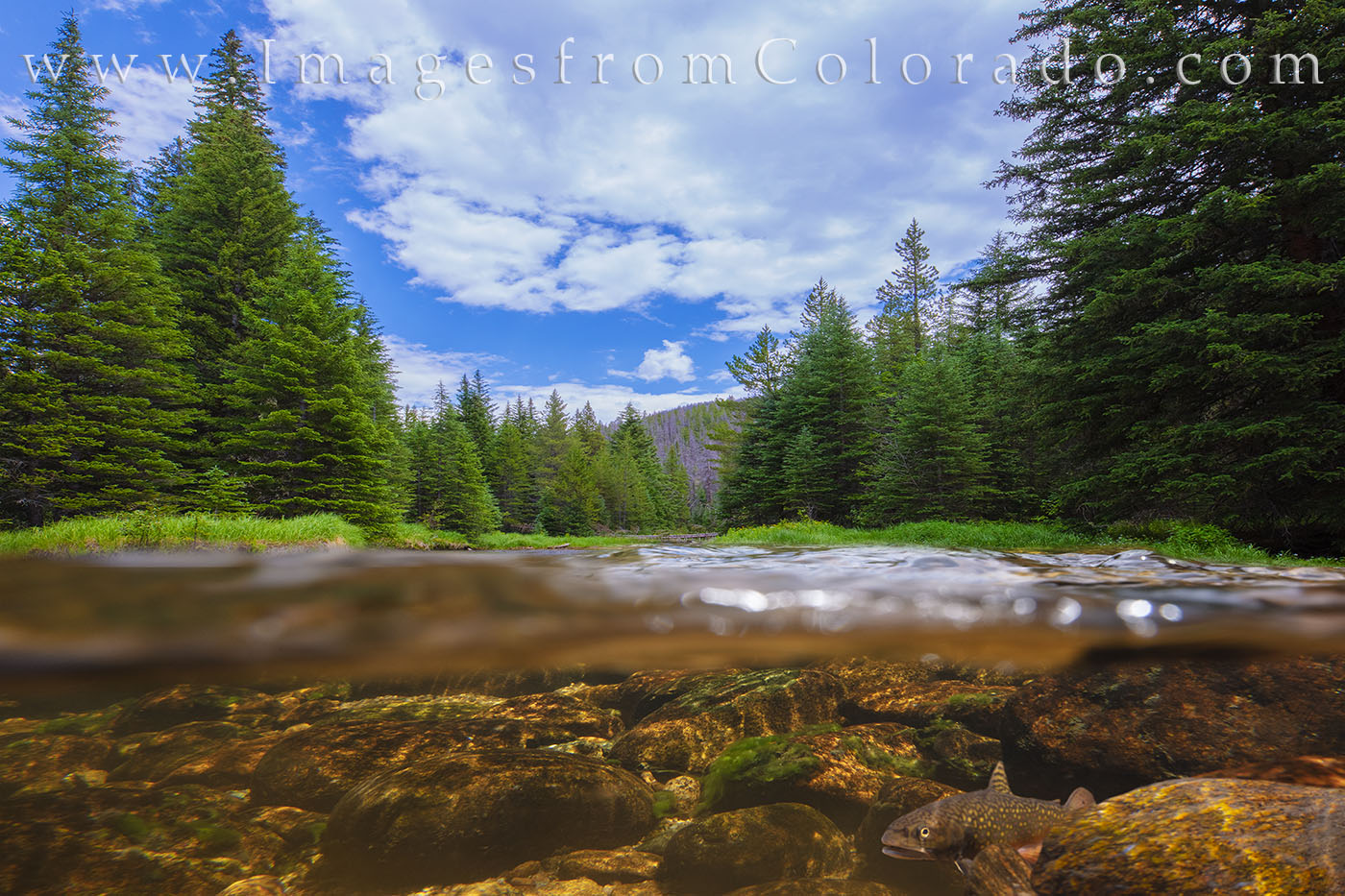 brook trout, north inlets, rocky mountain national park, underwater, stream, creek, mountains, trout, grand lake, north inlets trail, photo