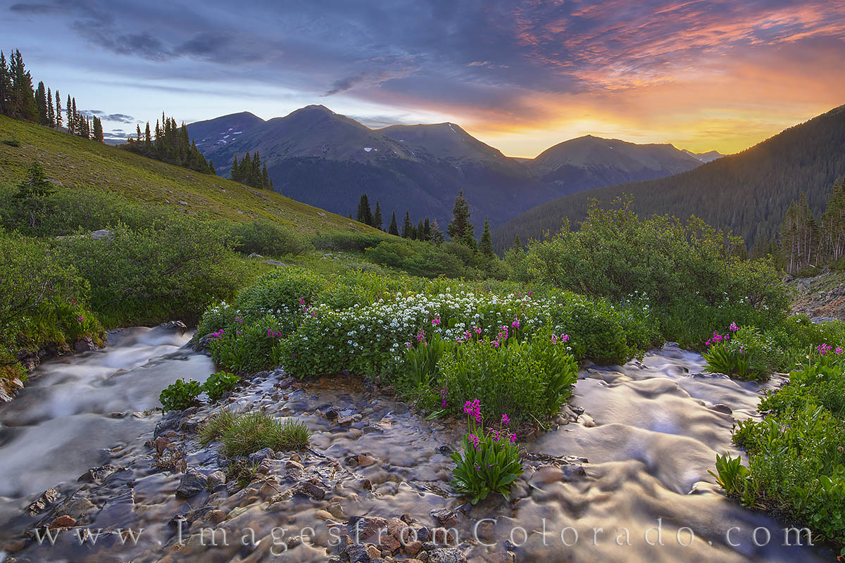 wildflowers, bulter gulch, stream, sunrise, hike, berthoud pass, clear county, solitude, parrys primrose, photo