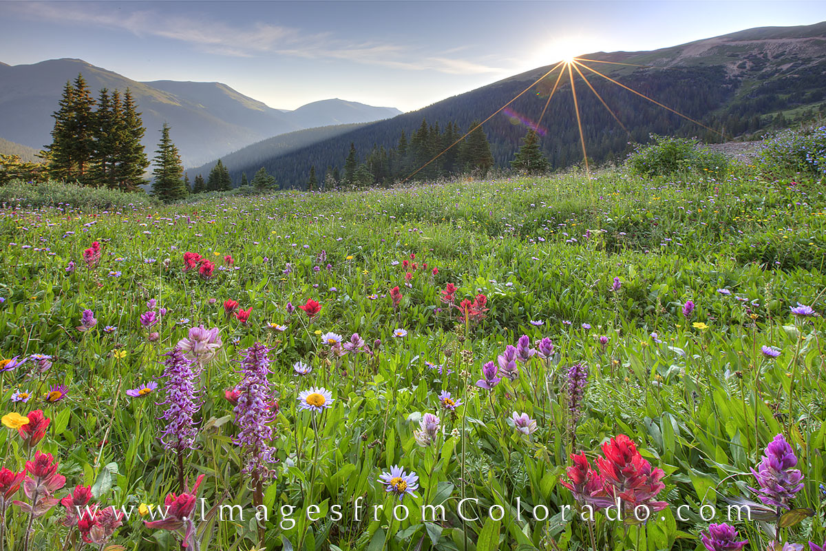 Butler Gulch and Colorado Wildflowers 7