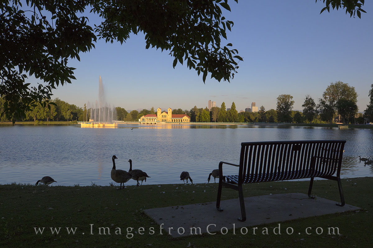 denver skyline, city park, denver images, city park images, downtown denver, canada geese, boathouse, boat house, denver, photo