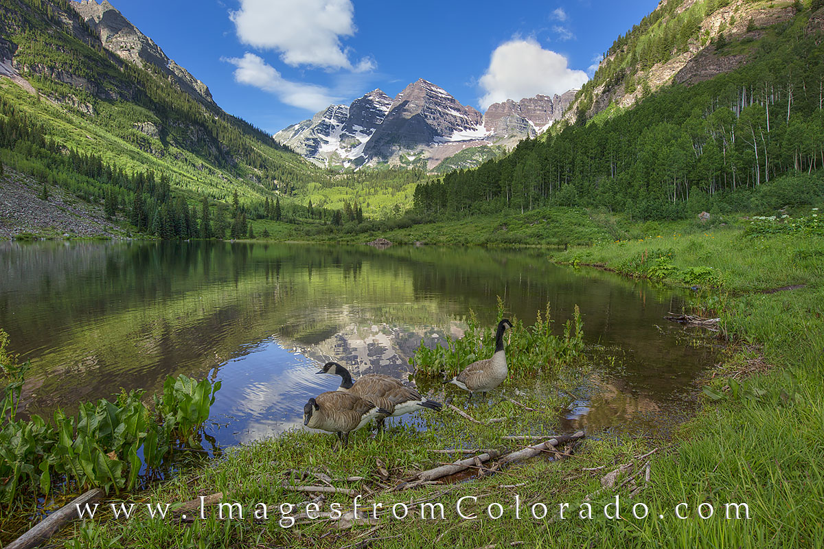 maroon bells, maroon bells wilderness, maroon lake, canada geese, aspen, 14ers, photo