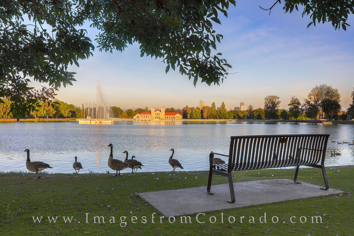 city park, city park images, denver skyline, denver images, denver skyline photos, canada geese, park bench, denver colorado, photo