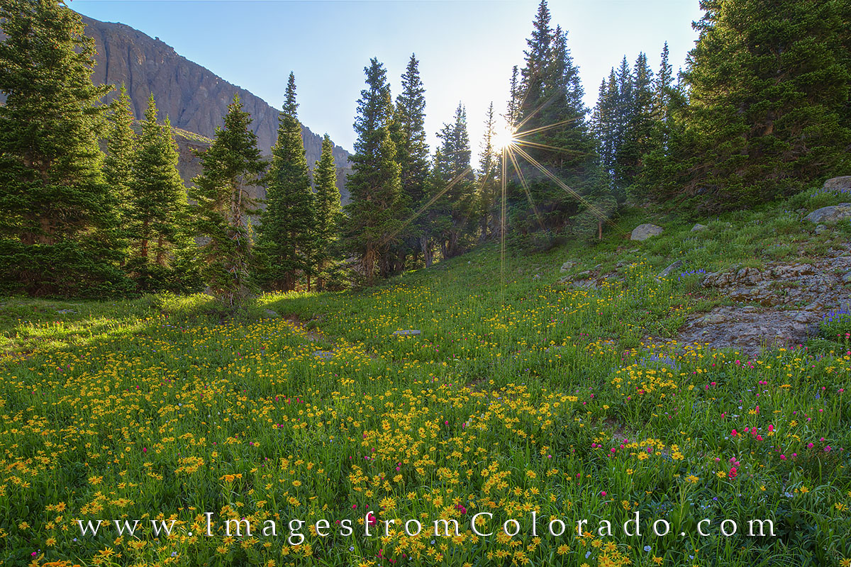 The Blue Lakes hike near Ridgway, Colorado, is well known for summer wildflowers. This wildfower photograph was taken before...