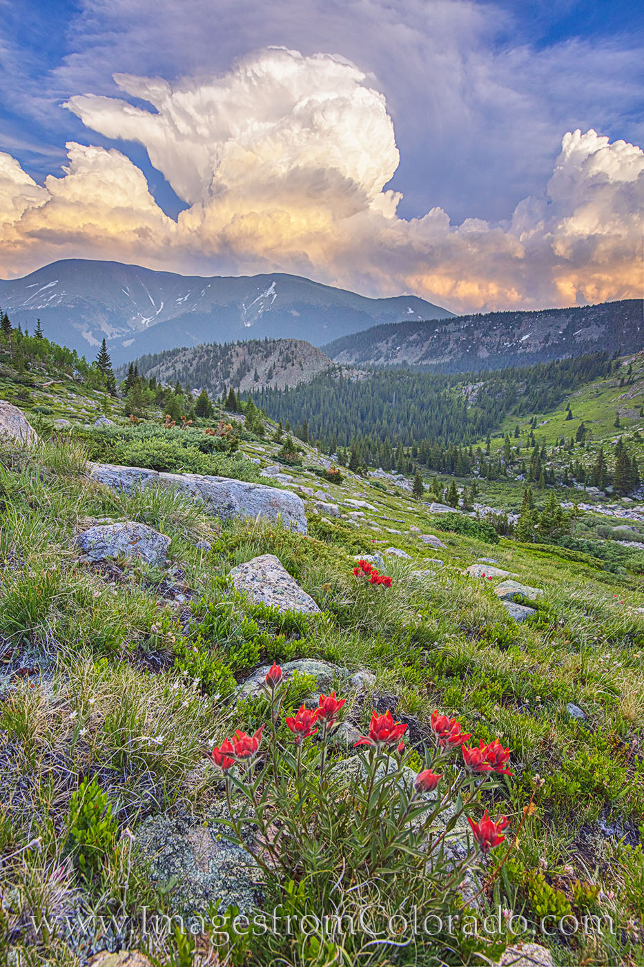 As storms brewed in the distance, red paintbrush, one of Colorado's most beautiful summer wildflowers, bloomed along the slopes...