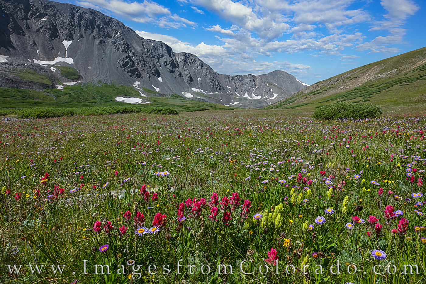 wildflowers, 14ers, grays peak, stevens gulch, torreys peak, continental divide trail, CDT, paintbrush, colorado wildflowrers, summer, summer hikes, morning, photo