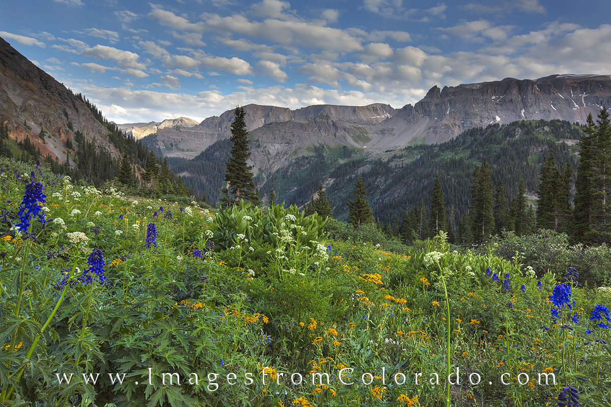colorado wildflowers, ouray images, ouray colorado, san juan mountains, san juans, yankee boy basin, summer wildflowers, colorado landscapes, photo