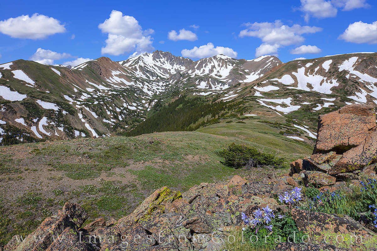 Pettingell Peak, herman gulch, jones pass, hiking, wildflowers, columbine, summer, morning, july, blue sky, 12, 000, 13er, dillon, photo