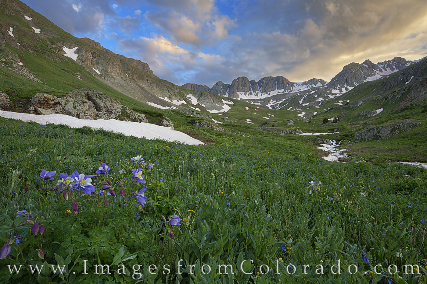 columbine, san juan mountains, lake city, american basin, wildflowers, handies peak, rocky mountains, blue flowers, photo