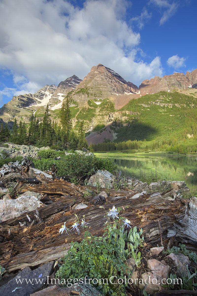 crater lake, maroon bells, columbine, colorado wildflowers, colorado summer, aspen in summer, aspen, photo