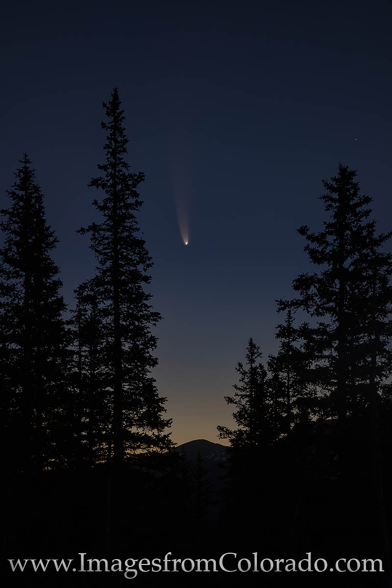 comet, neowise, pine trees, berthoud pass, morning, hiking, night sky, celestial event, photo