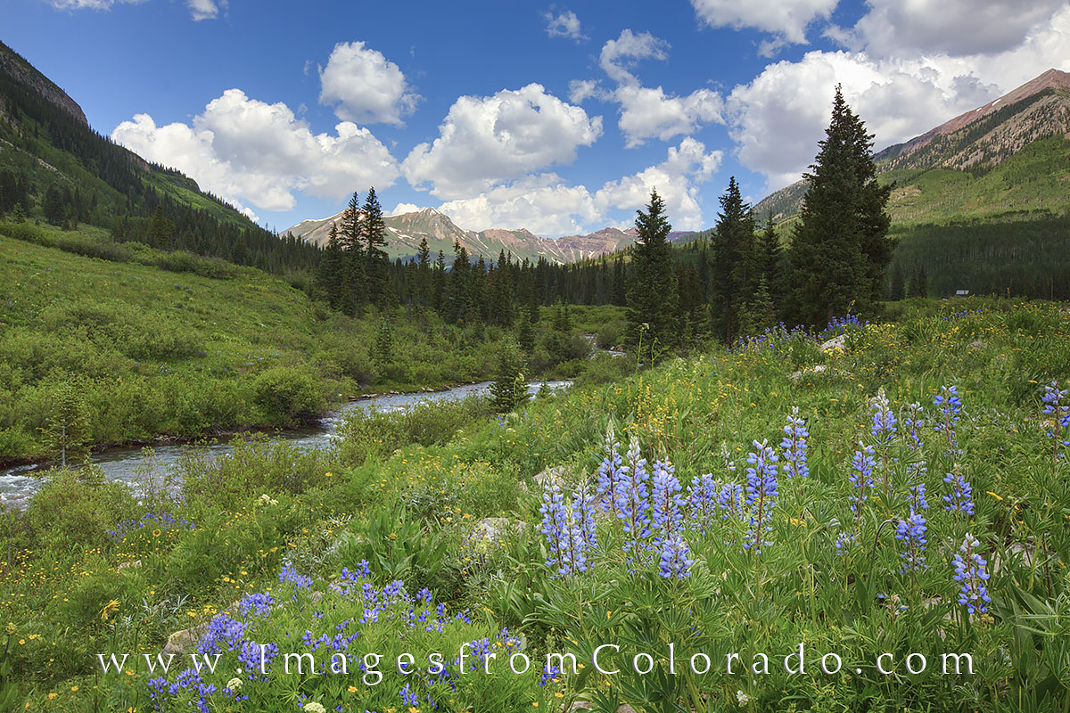 colorado wildflowers, crested butte, Gothic Road, west maroon pass, columbine, aspen, summer, landscapes, hiking, hiking trails, photo