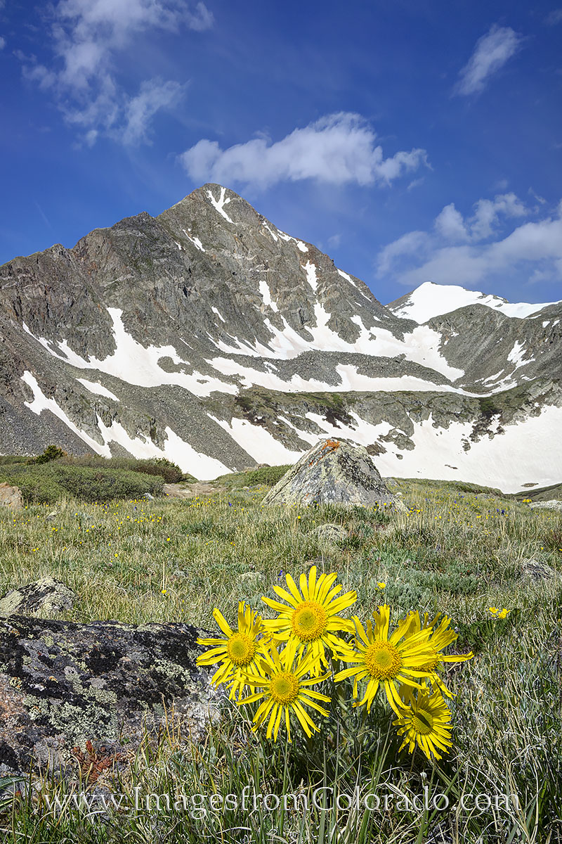 colorado wildflowers, breckenridge, crystal peak, upper crystal lake, lower crystal lake, crystal lake hike, breckenridge hikes, colorado trails, photo