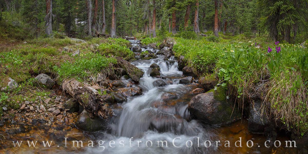 current creek, berthoud pass, panorama, wildflowers, summer, runoff, spring melt, grand county, photo