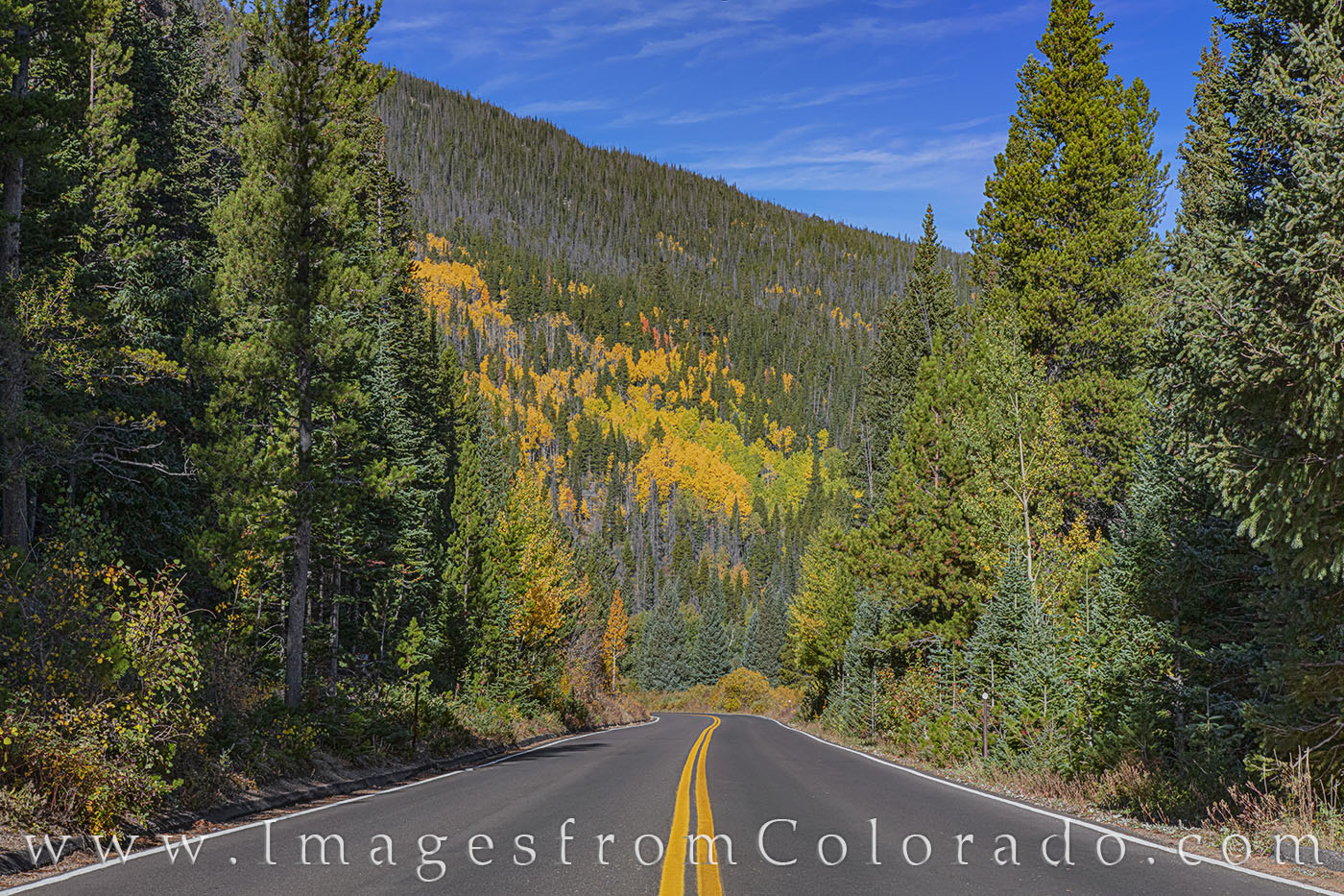 trail ridge road, autumn, fall, aspen, rocky mountain national park, morning, blue, photo