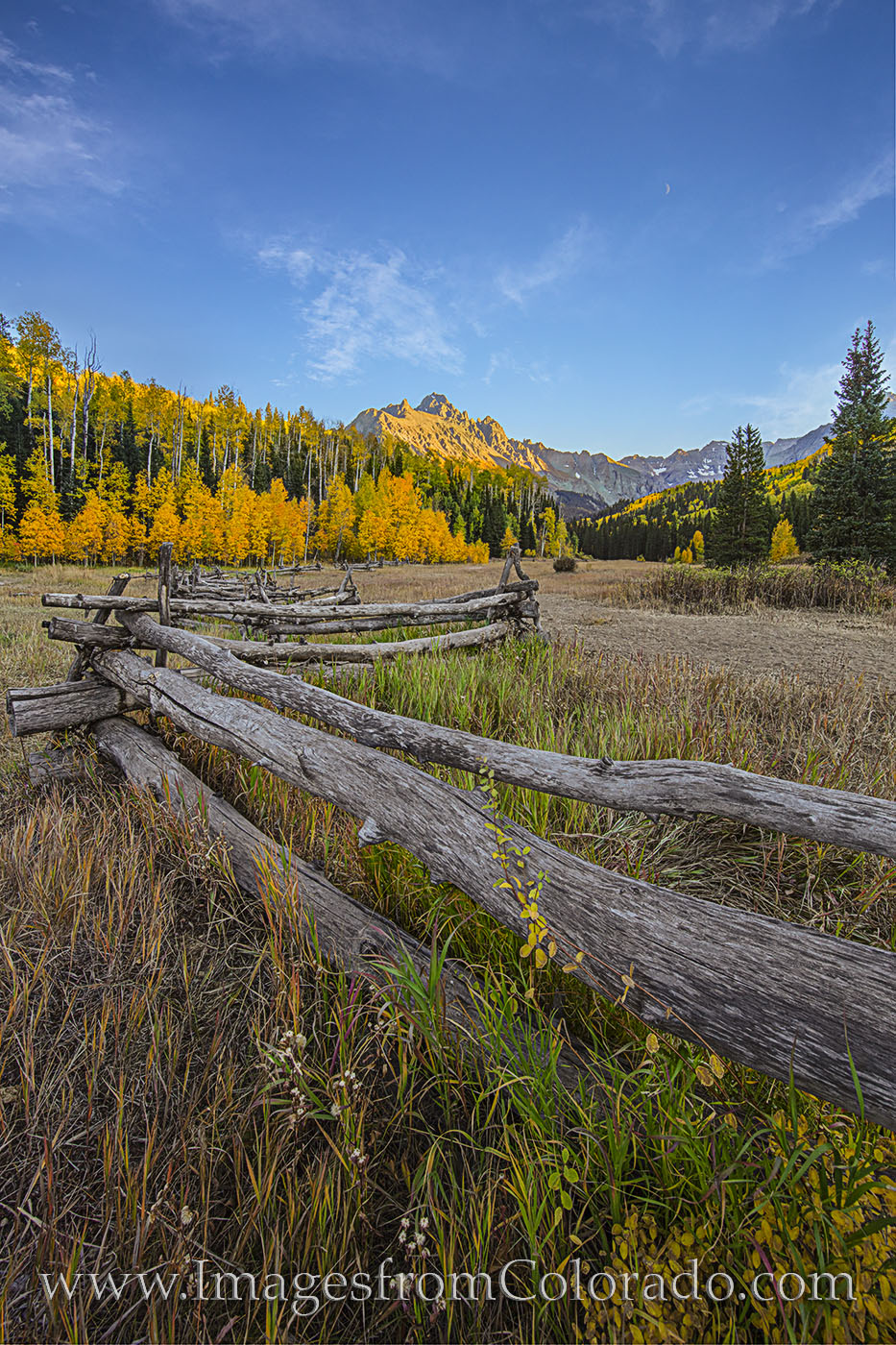 aspen, CR 7, fall Dallas Divide, Sneffels, fence, autumn, photo