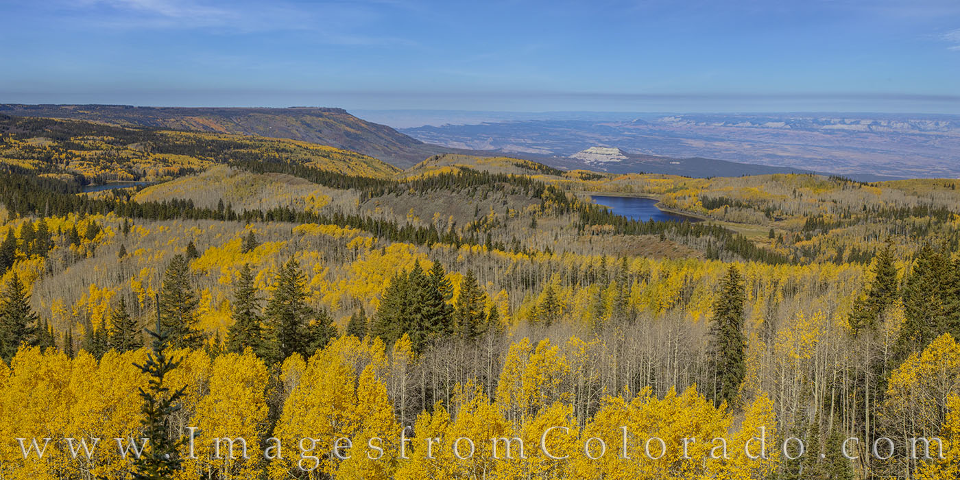 aspen, grand mesa, fall, autumn, yellow, gold, colors, mesa lakes, photo