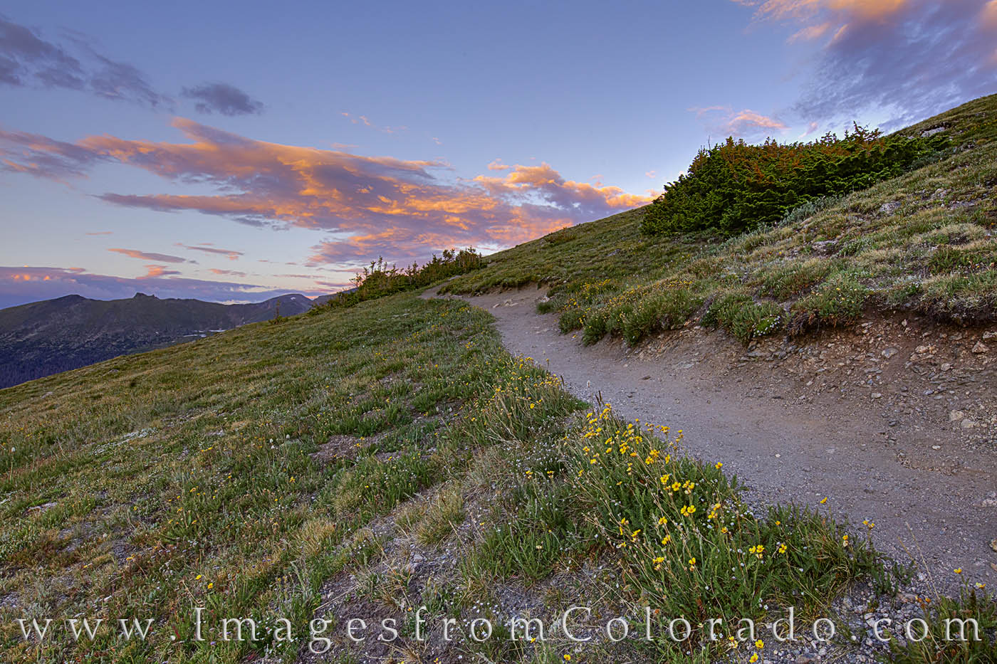 RMNP, sunset, rocky mountains, trail ridge road, summer, national parks, RMNP prints, colorado prints, wildflowers, photo