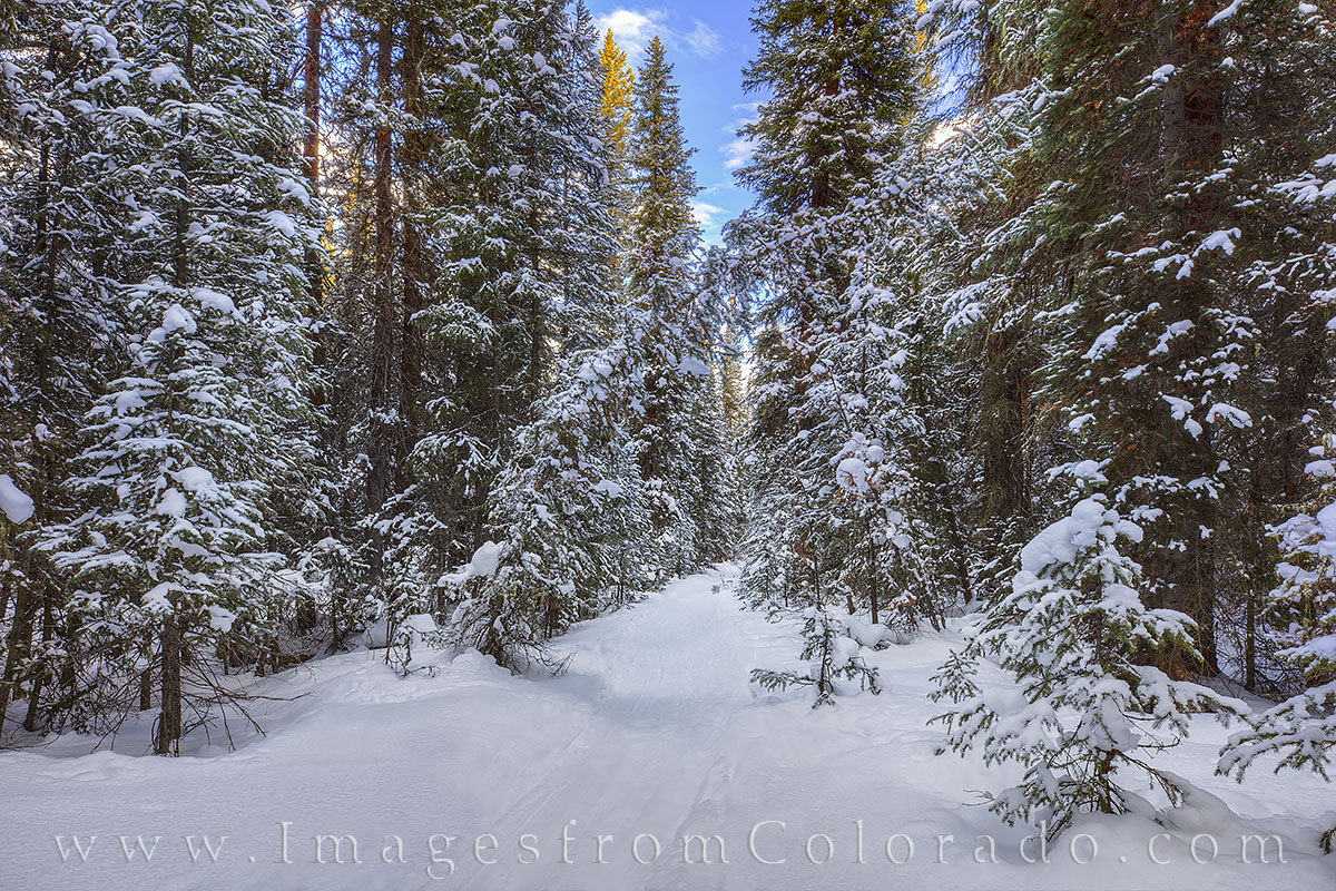 winter, hiking, snowshoeing, byer peak, trail, winter park, fraser, grand county, quiet, solitude, december, morning, pine, snow, photo