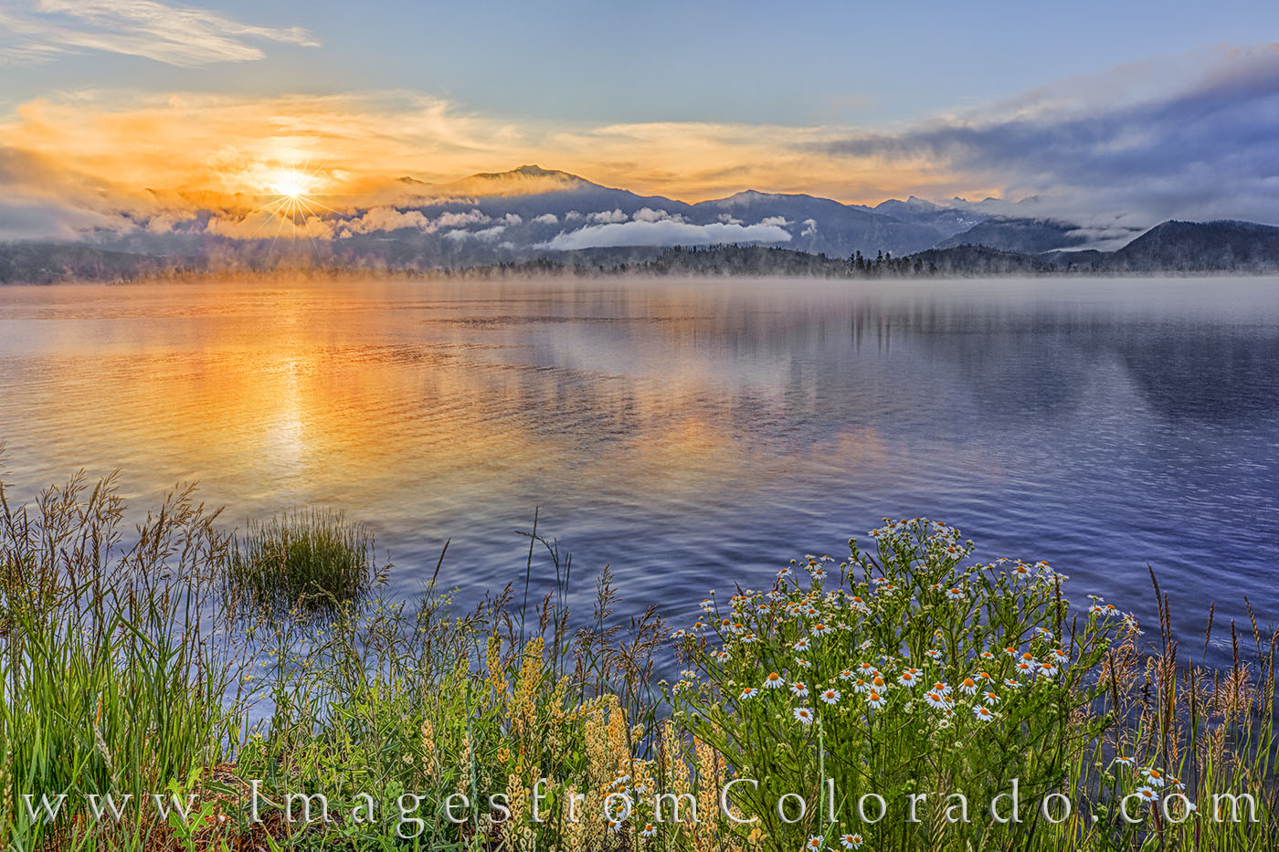 lake granby, grand lake, grand county, morning, fog, lake, rocky mountains, sunrise, wildflowers, daisies, photo