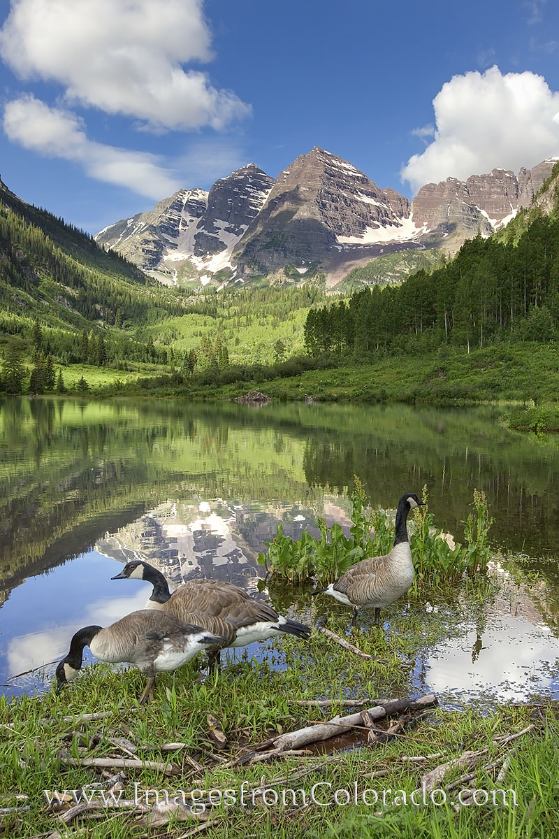 Maroon bells, aspen, maroon bells images, 14ers, geese, aspen images, Colorado morning, reflections, Colorado prints, photo