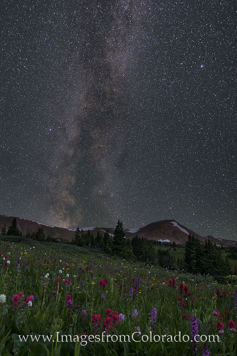 colorado wildflower images, colorado wildflowers, milky way, milky way photos, butler gulch, winter park, empire, colorado at night, colorado nightscapes, photo