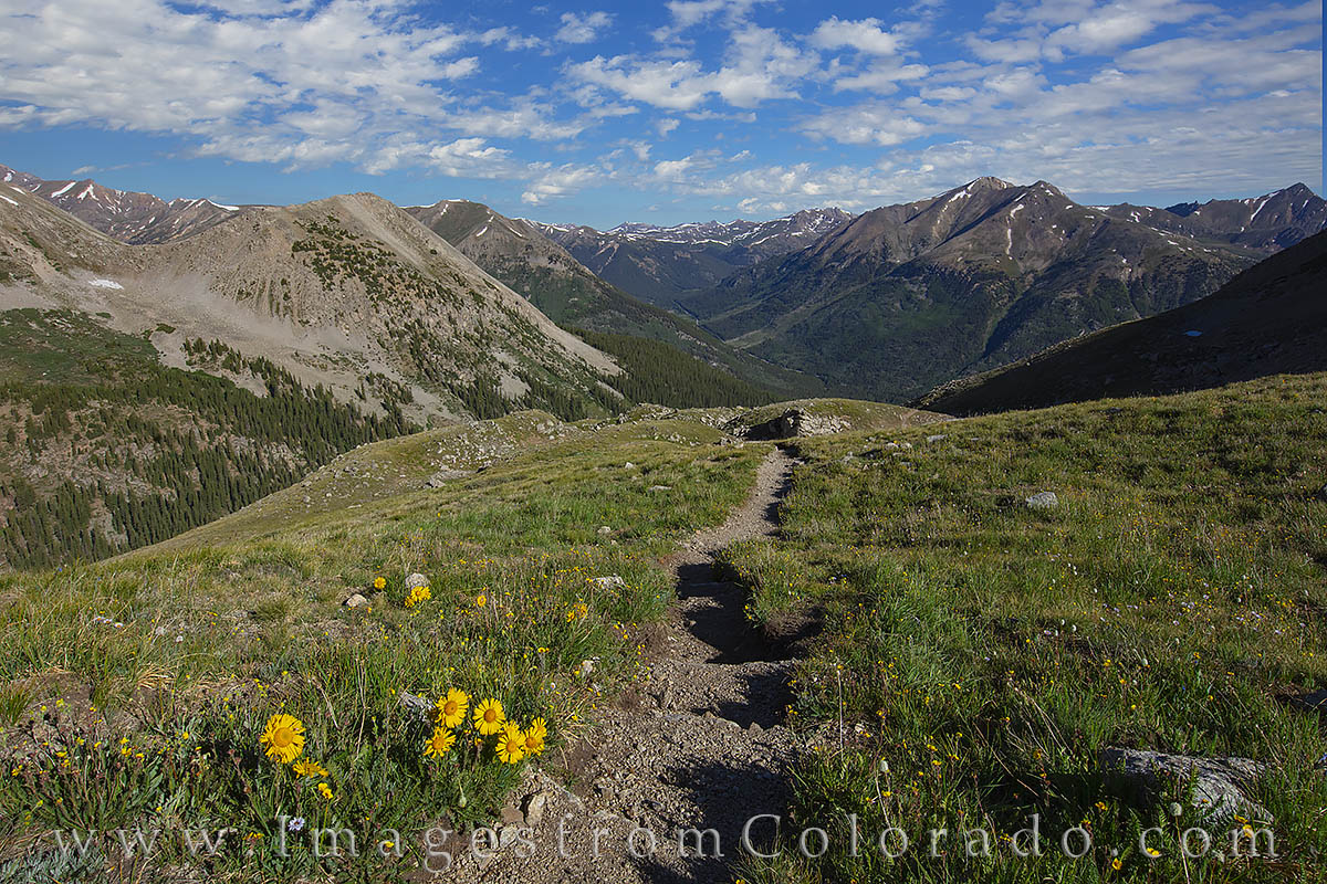 wildflowers, la plata, trail, 12, 000', july, summer, 14ers, hiking, exploring, colorado prints, photo
