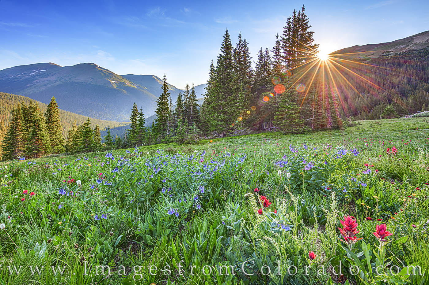 Red Paintbrush and shades of bluebell wildflowers fill the green slopes of Butler Gulch on a cold summer morning. As one of my...