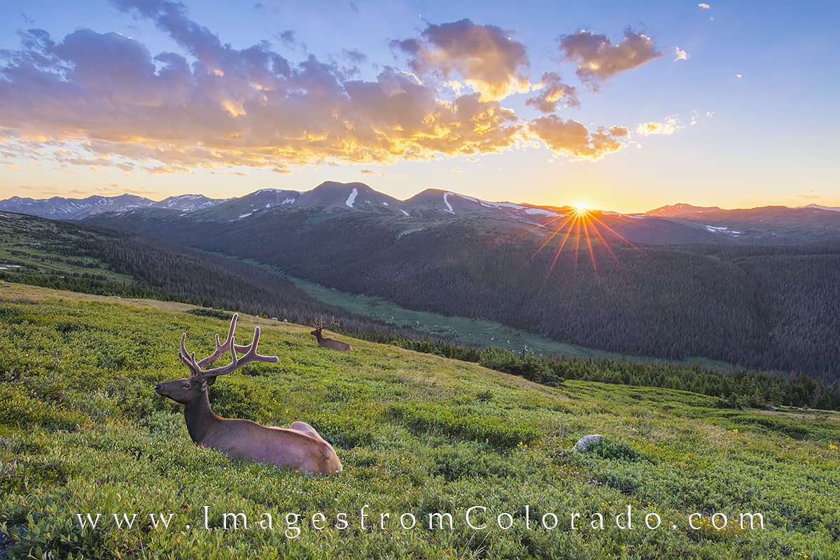 rocky mountain national park, colorado images, colorado prints, colorado landscapes, RMNP images, colorado, rocky mountains, elk, elk images, colorado sunset