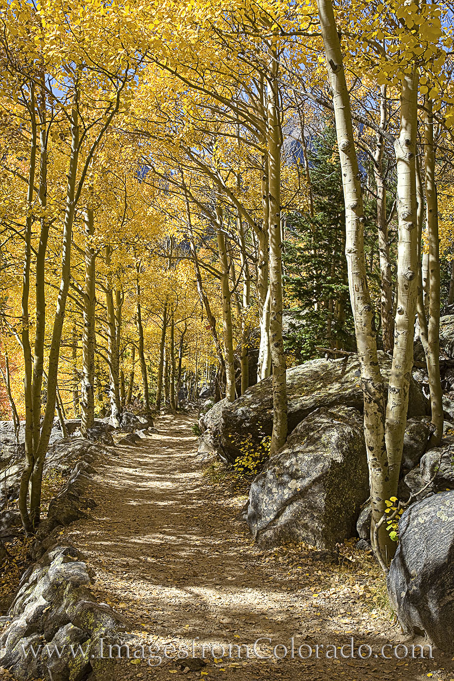 aspen, trail, path, rocky mountain national park, rmnp, bear lake, morning, fall, autumn, cold, photo