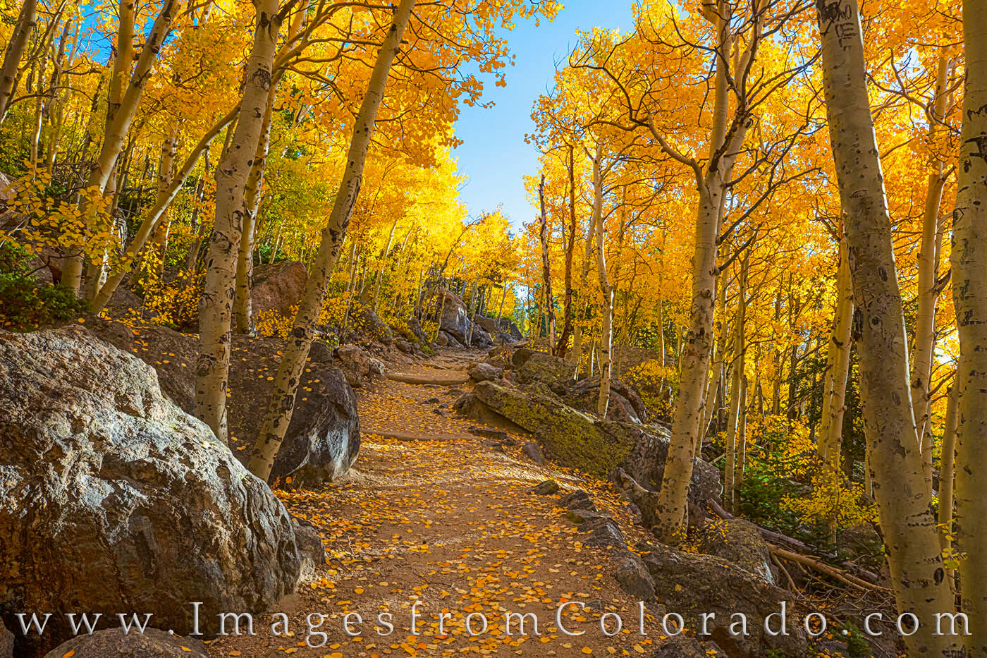 Rocky Mountain National Park, Estes Park, Bear Lake, Aspen, Autumn, fall, gold, yellow, morning, trail, path, hike, photo