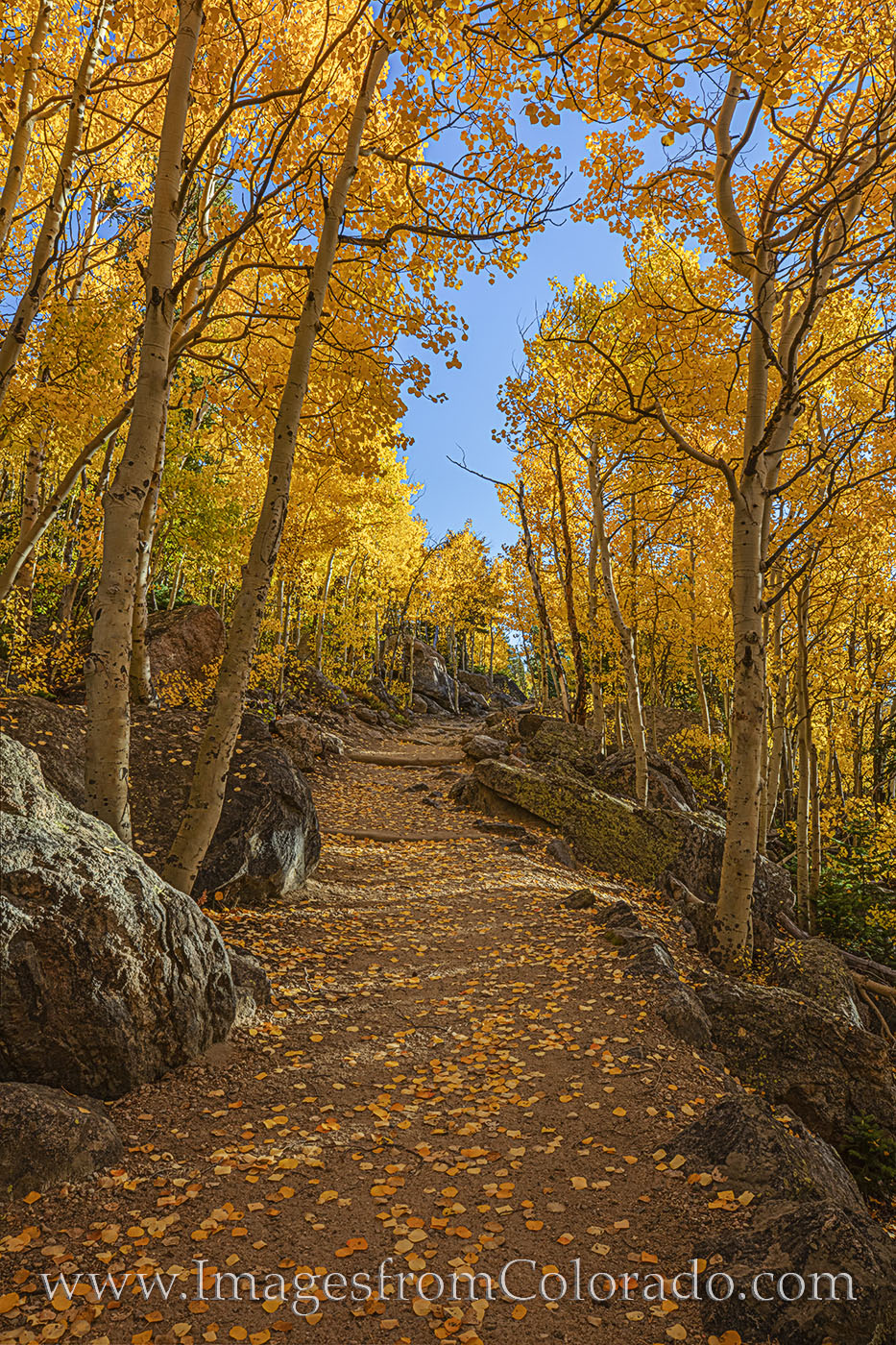 rocky mountain national park, estes park, bear lake, aspen, aspen leaves, fall colors, autumn colors, trail, path, morning, october, photo