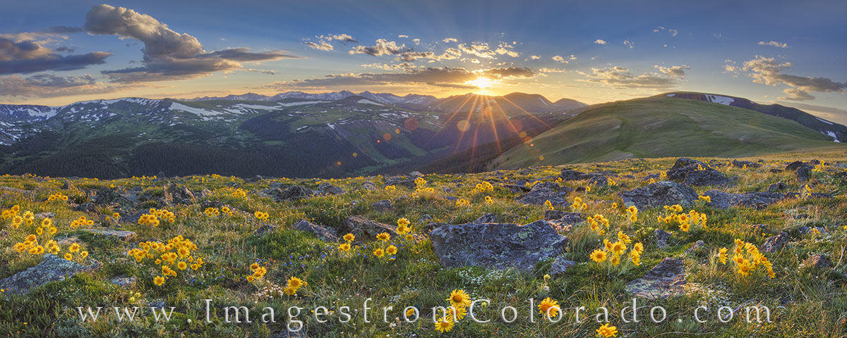 rocky mountain national park, colorado wildflowers, summer blooms, rocky mountains, trail ridge road, colorado sunset, mountain sunset, colorado landscapes, old man of the mountain, wildflowers, panor, photo