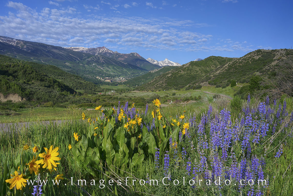 snowmass, snowmass village, colorado wildflowers, maroon bells, aspen, colorado summer, rocky mountain summer, photo