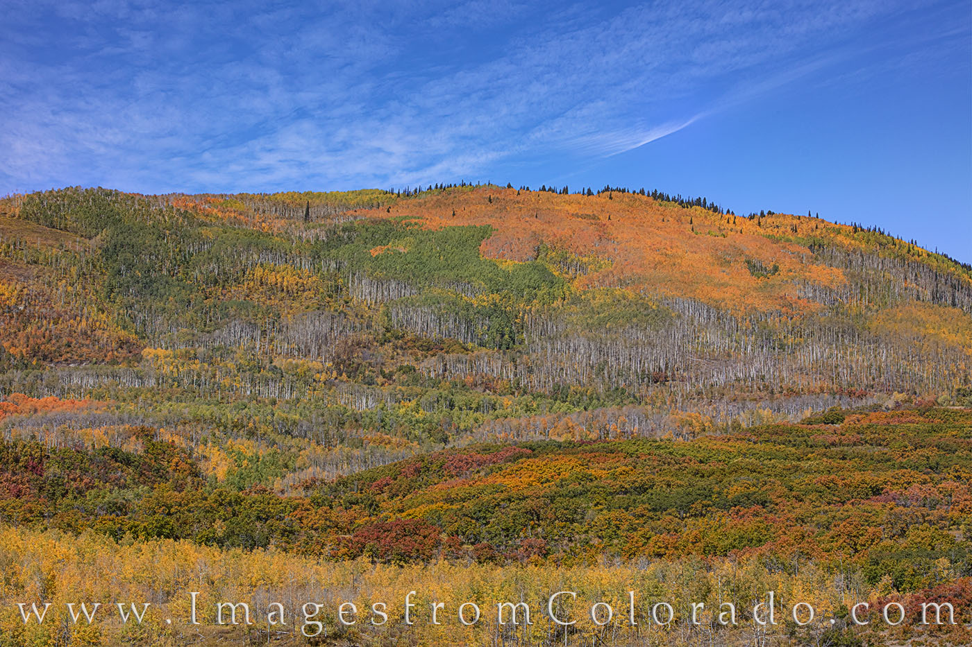 grand mesa, fall colors, autumn, aspen, photo