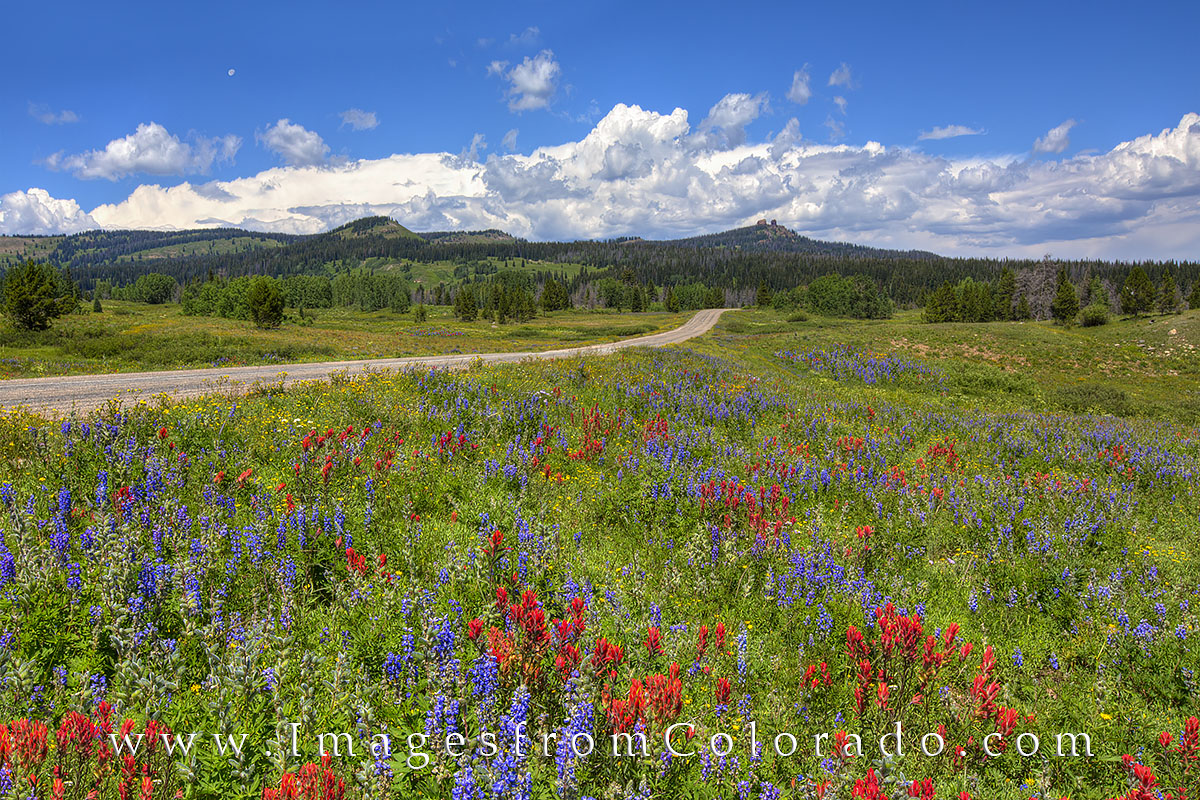 Colorado Wildflower images, Colorado Wildflower photos, wildflowers, paintbrush, lupine, Colorado Wildflowers, wildflowers, colorado, photo