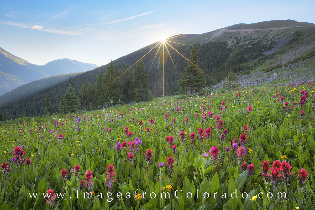 colorado wildflower images, colorado landscapes, colorado images, rocky mountains, berthoud pass, butler gulch, colorado sunrise, fraser, winter park, empire, photo