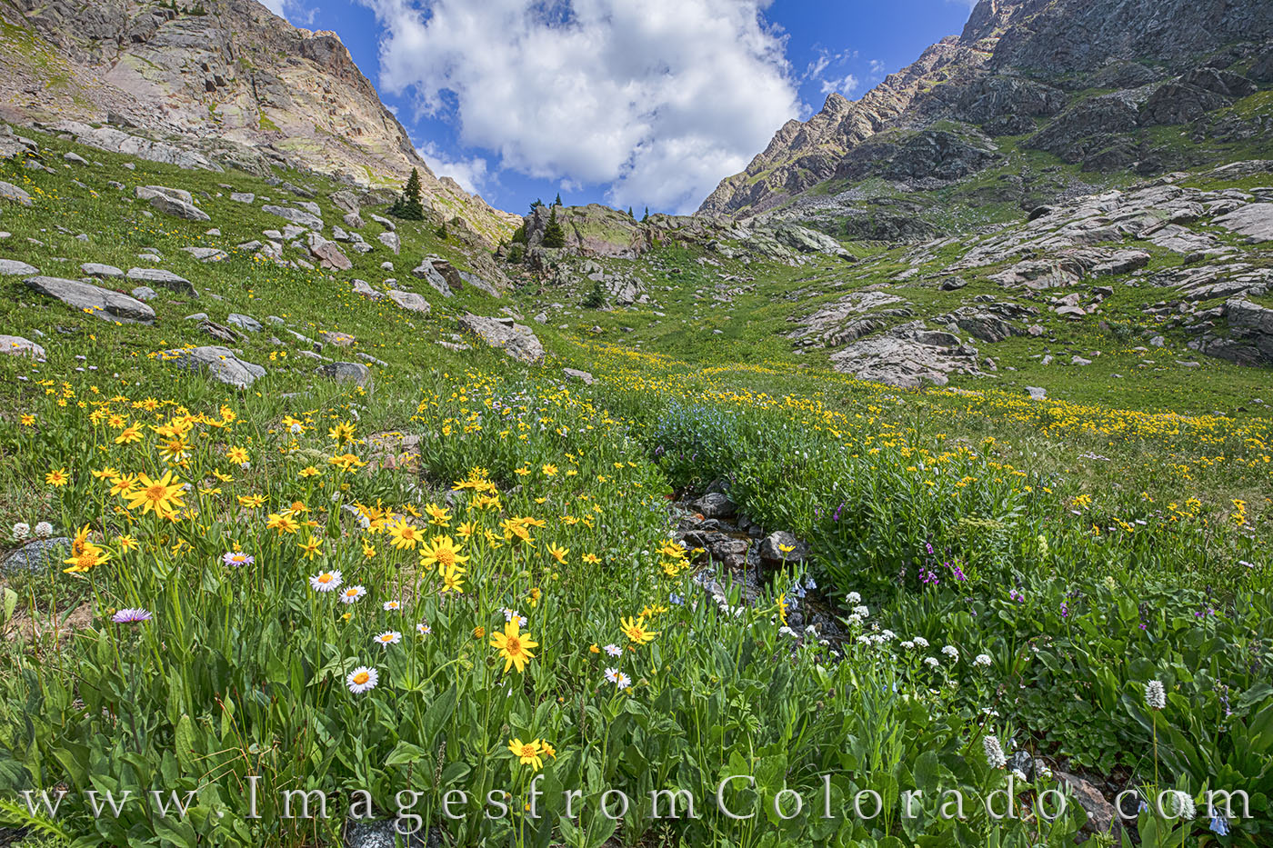 Aspen Sunflowers and Purple Asters line a small stream flowing down from the peaks of Summit County. These wildflowers were found...