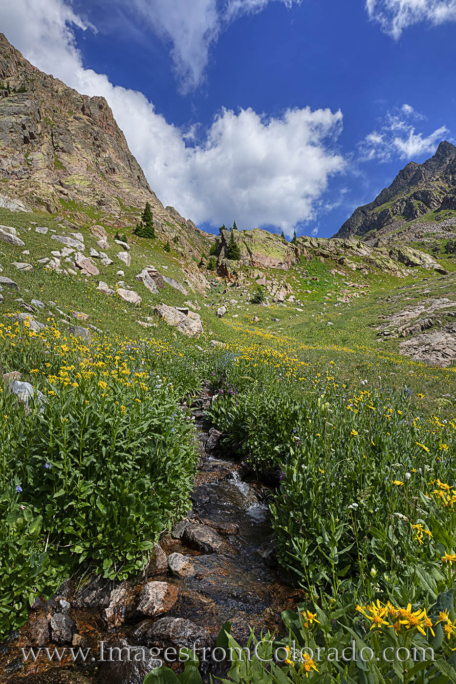wildflowers, summit county, piney lake, hiking, summer, colorado wildflowers, vail, morning, cirque, water, stream, photo