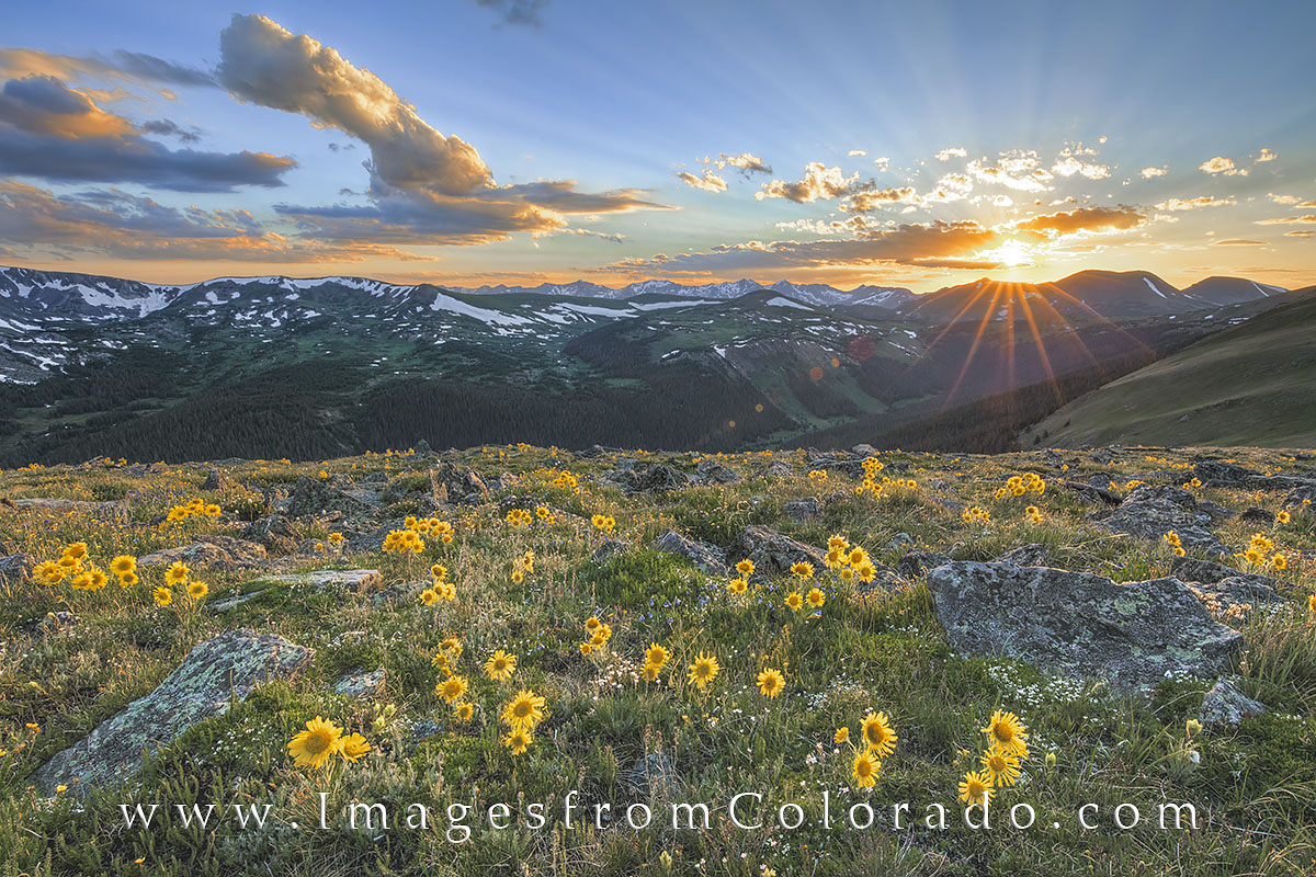colorado wildflowers, sunflowers, old man of mountain, rocky mountain national park, RMNP, colorado sunflowers, colorado sunset, rocky mountains, grand county, trail ridge road, photo