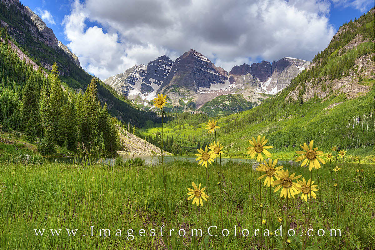 maroon bells images, colorado wildflowers, maroon lake, sunflowers, colorado summer, maroon bells prints, 14ers, colorado wildflower prints, colorado landscapes, colorado icons, photo