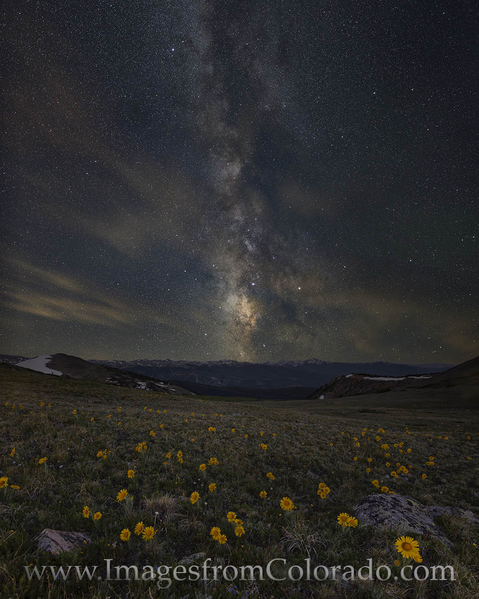 Sunflowers sleep under the Milky Way at 11,700' atop Rollins Pass. In early July the Milky Way rolls across the night sky in...