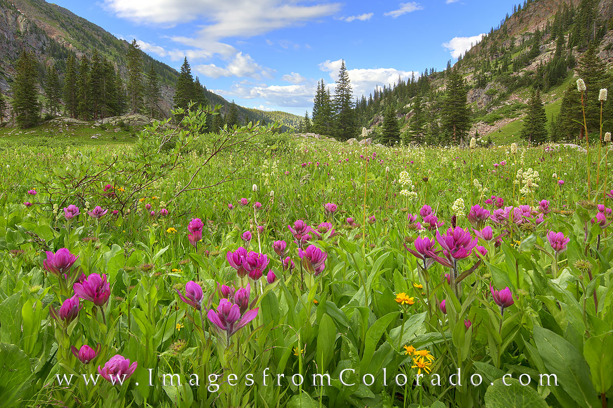 colorado wildflowers, booth lake, colorado summer, prints, eagles nest wilderness, vail colorado, vail, photo