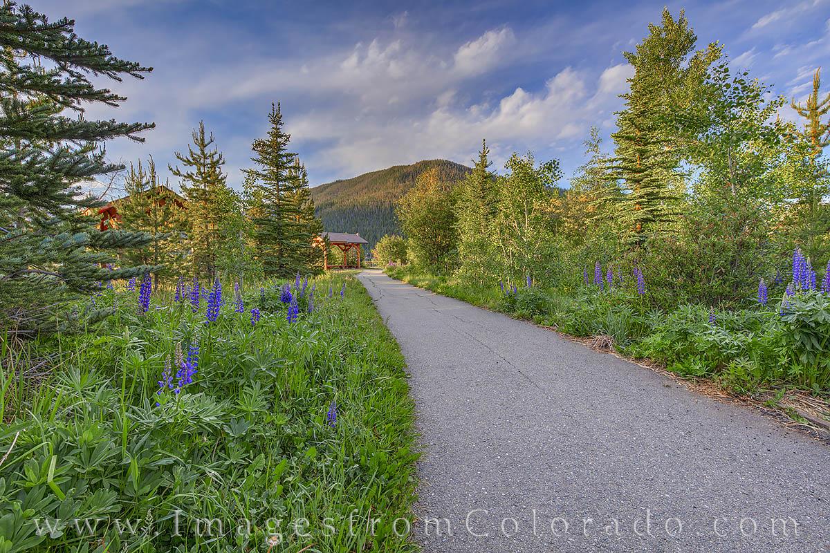 grand lake, trail, path, walking, morning, lupine, peace, photo