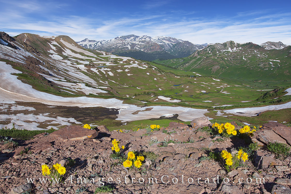 west maroon pass, wildflowers, colorado flowers, crested butte, aspen, maroon bells, maroon pass, sunflowers, photo