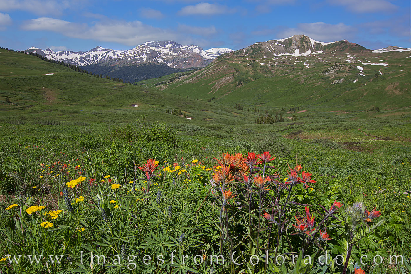 wildflowers, aspen, maroon bells, maroon pass, crested butte, hiking, colorado hikes, paintbrush, morning, summer, photo