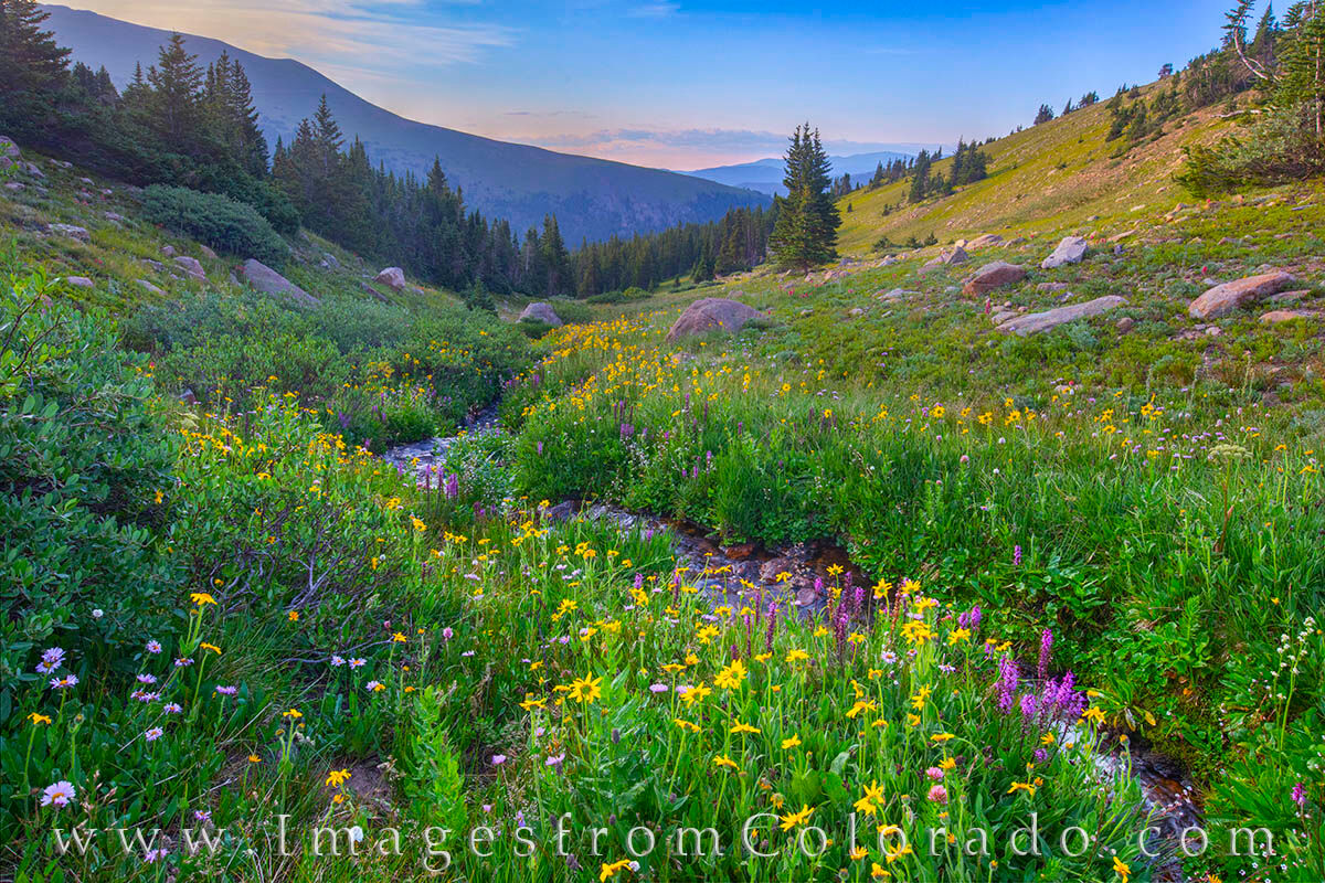 High up on Berthoud Pass, this little creek shows off amazing summer widlflowers. Not far from the much more trodden First Creek...