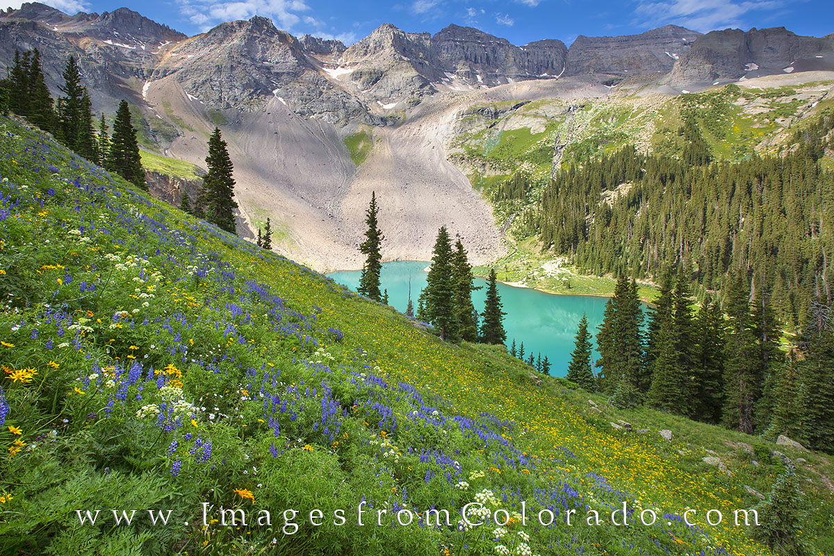 blue lakes, ouray, colorado wildflowers, blue lakes trail, lower blue lake, upper blue lake, blue lakes pass, colorado flowers, colorado summer, photo