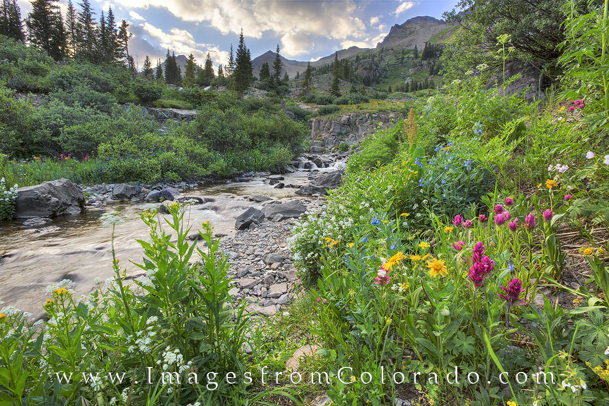 yankee boy basin, ouray, san juan mountains, colorado wildflowers, summer flowers, colorado summer, 14ers, colorado landscape, little switzerland, photo