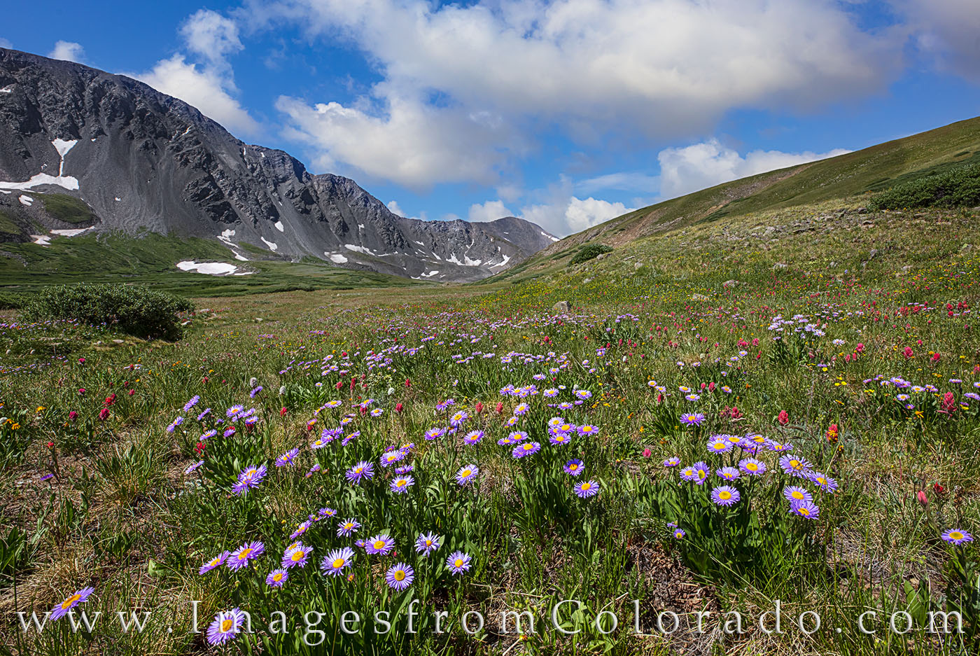wildflowers, grays peak, stevens gulch, hiking, colorado hiking, 14ers, Grays peak trail, torreys peak trail, colorado wildflowers, summer, afternoon paintbrush, daisies, photo